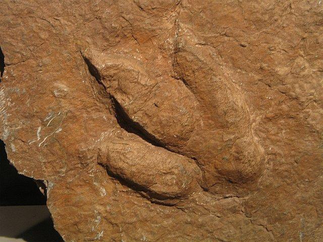 El valle de los dinosaurios: Enciso (La Rioja) 4