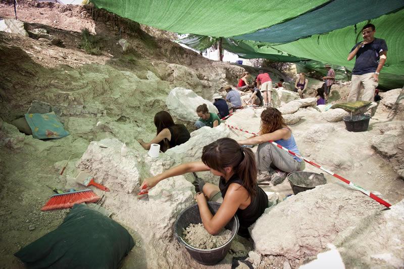El tigre de dientes de sable que habitó el Cerro de los Batallones (Madrid) 2