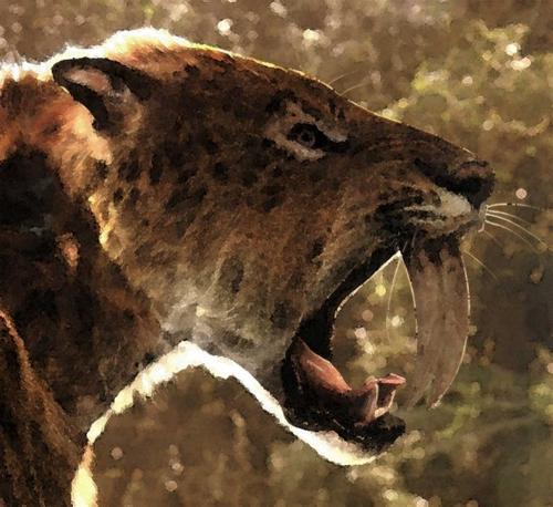 El tigre de dientes de sable que habitó el Cerro de los Batallones (Madrid) 3