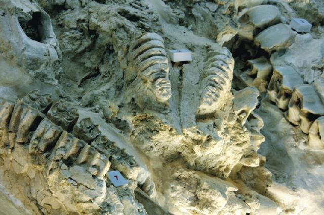 restos arqueológicos de Orce