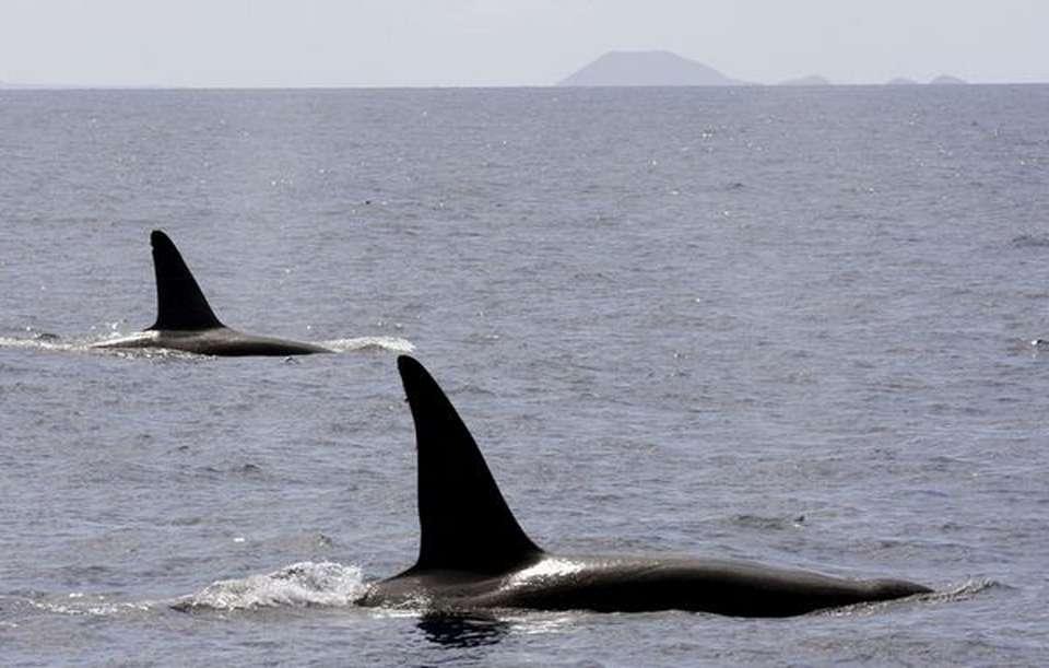 La Cueva de las Orcas: un santuario del Neolítico