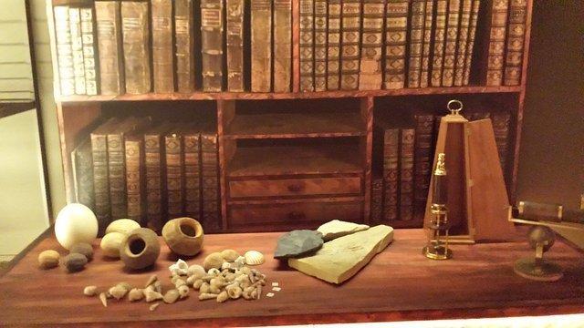 Museo Martorell ciencias catalu%C3%B1a - Los gabinetes de curiosidades en España