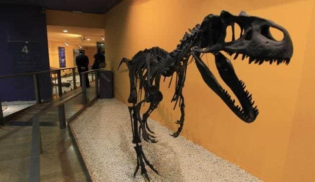 museo ciencias naturales valencia - Los gabinetes de curiosidades en España