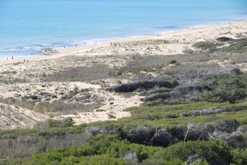 shutterstock 415379335 compressor e1500963936248 - Dunas y fenicios en la costa de Alicante: Guardamar del Segura