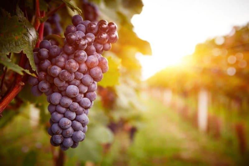 El vino en la antigua Roma